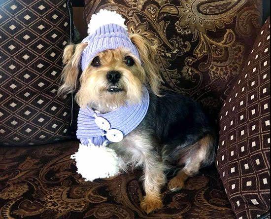 Gorro y bufanda para perritos reciclando un suéter