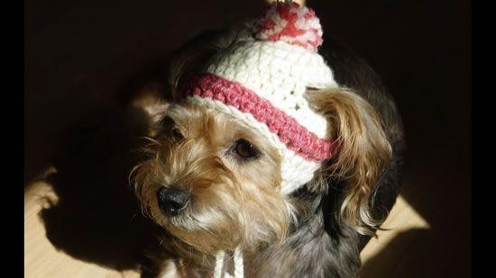 DIY Gorro para mascotas a crochet