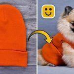 DIY Ideas geniales para mascotas y más
