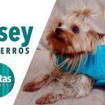 Jersey para mascotas tejido Crochet